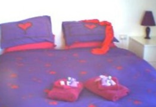 Aloomba Lavender - Accommodation - Mount Gambier Accommodation