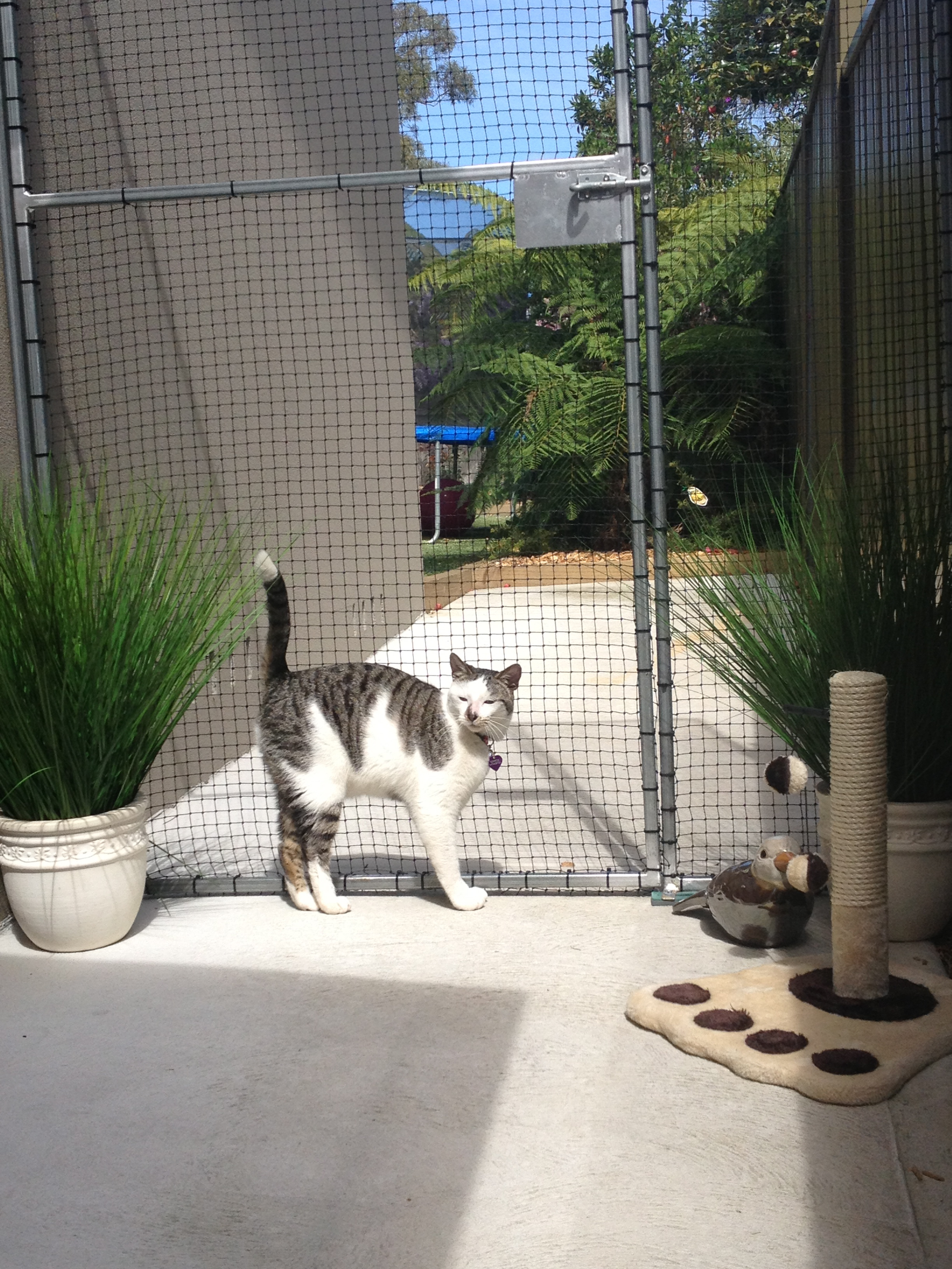 Caringbah Cat Hotel - Mount Gambier Accommodation