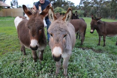Donkey Tales Farm Cottages - Mount Gambier Accommodation