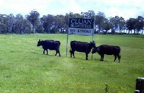 Cluan Homestead - Mount Gambier Accommodation