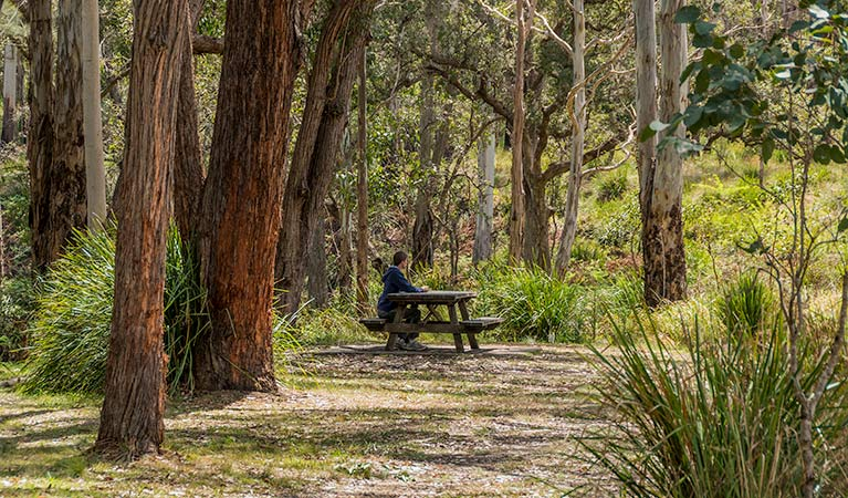 Koreelah Creek campground - Mount Gambier Accommodation