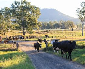 Tommerups Dairy Farmstay - Mount Gambier Accommodation