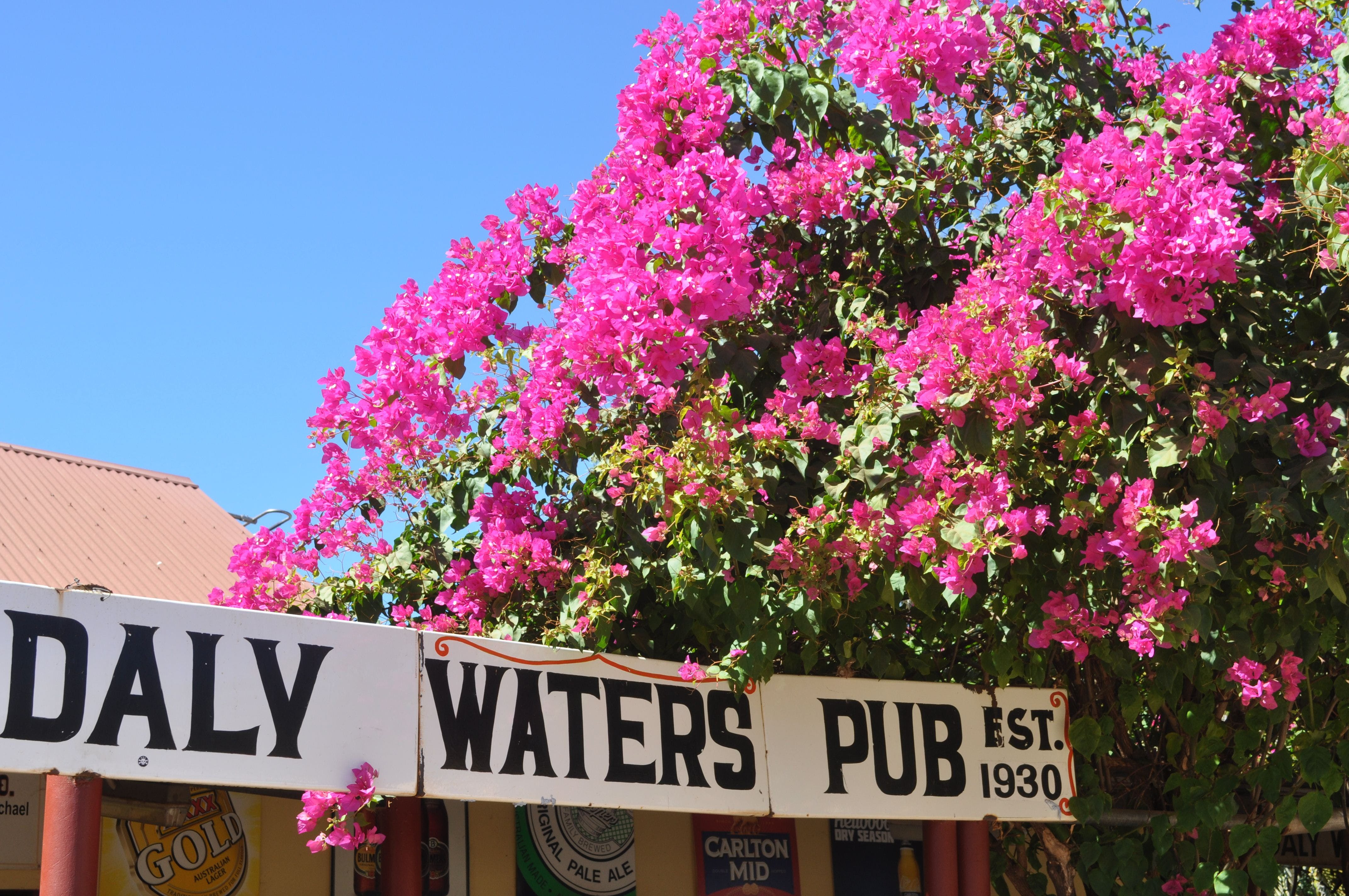 Daly Waters Historic Pub - Mount Gambier Accommodation