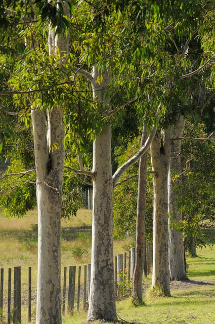 Stringybark Cottages - Mount Gambier Accommodation