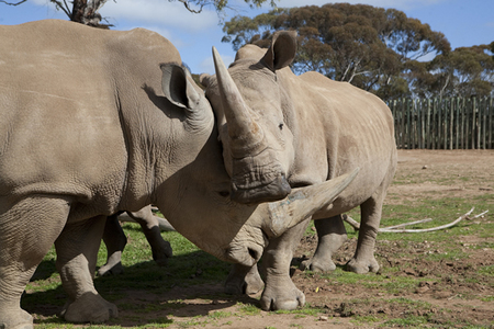 Monarto Zoo - Mount Gambier Accommodation