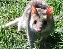 Urimbirra Wildlife Park - Mount Gambier Accommodation