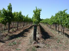Temple Bruer Winery - Mount Gambier Accommodation