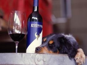 Koonara Wines - Mount Gambier Accommodation