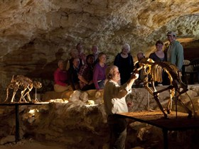 Naracoorte Caves National Park - Mount Gambier Accommodation