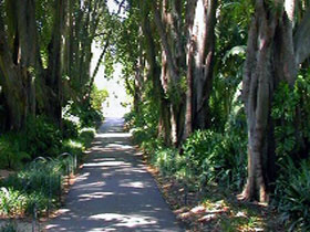 Adelaide Botanic Garden - Mount Gambier Accommodation