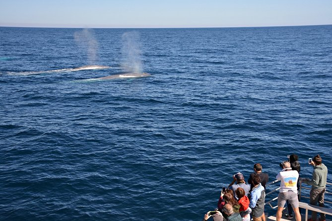 Blue Whale Perth Canyon Expedition - Mount Gambier Accommodation
