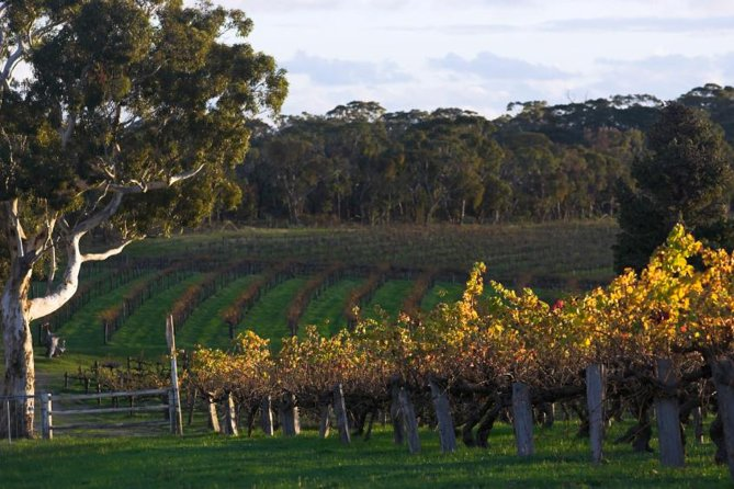 Barossa Valley with Hahndorf Tour from Adelaide - Mount Gambier Accommodation