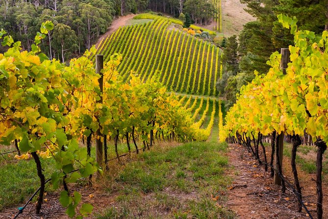 Private Adelaide Hills Wine Region Tour - Mount Gambier Accommodation
