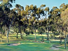 Tanunda Pines Golf Club - Mount Gambier Accommodation
