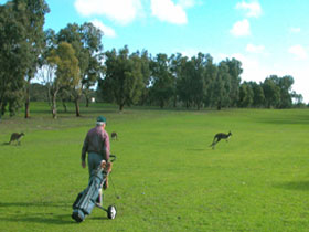 Coffin Bay Golf Club - Mount Gambier Accommodation