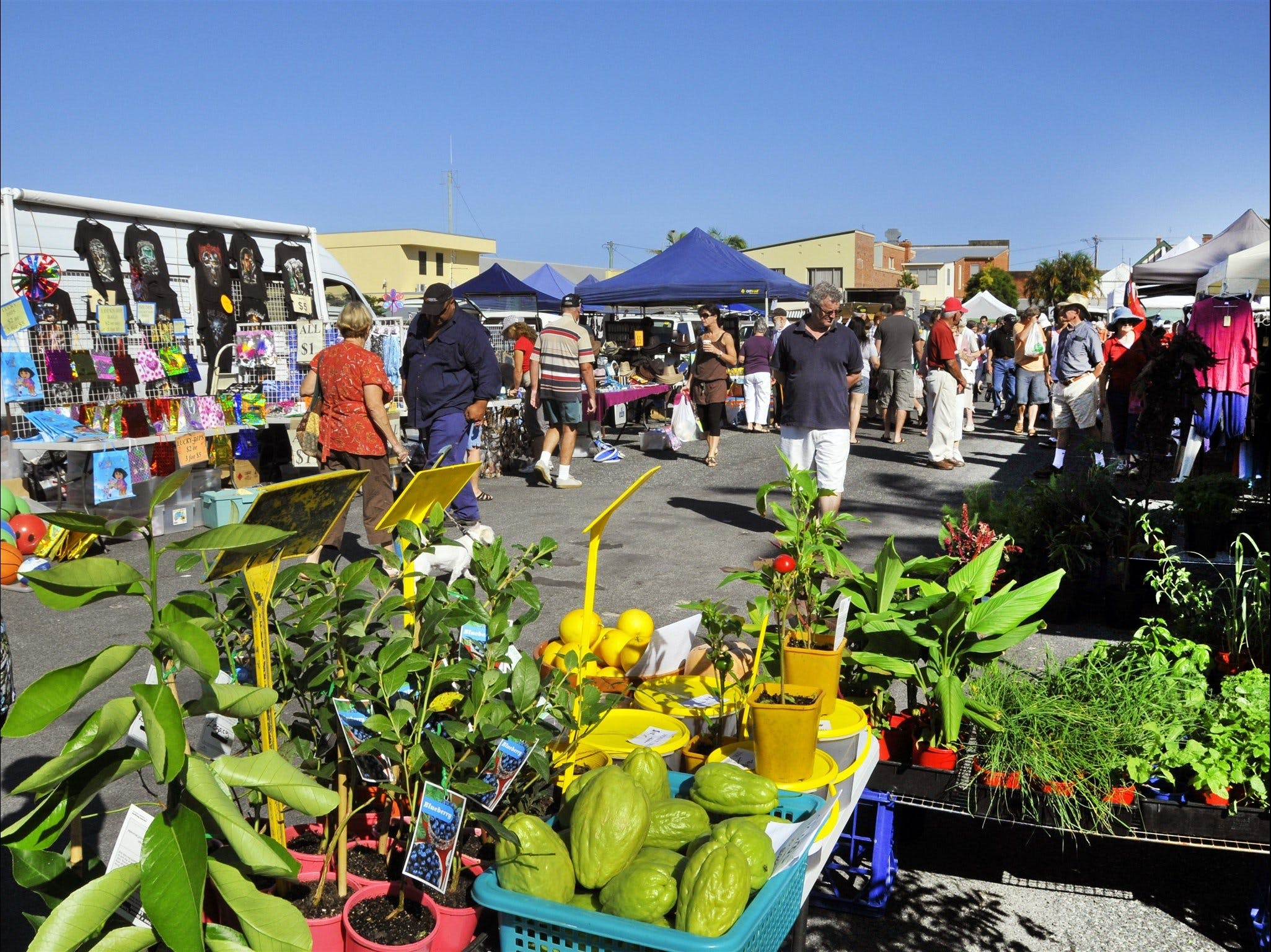 Maclean Community Monthly Markets - Mount Gambier Accommodation
