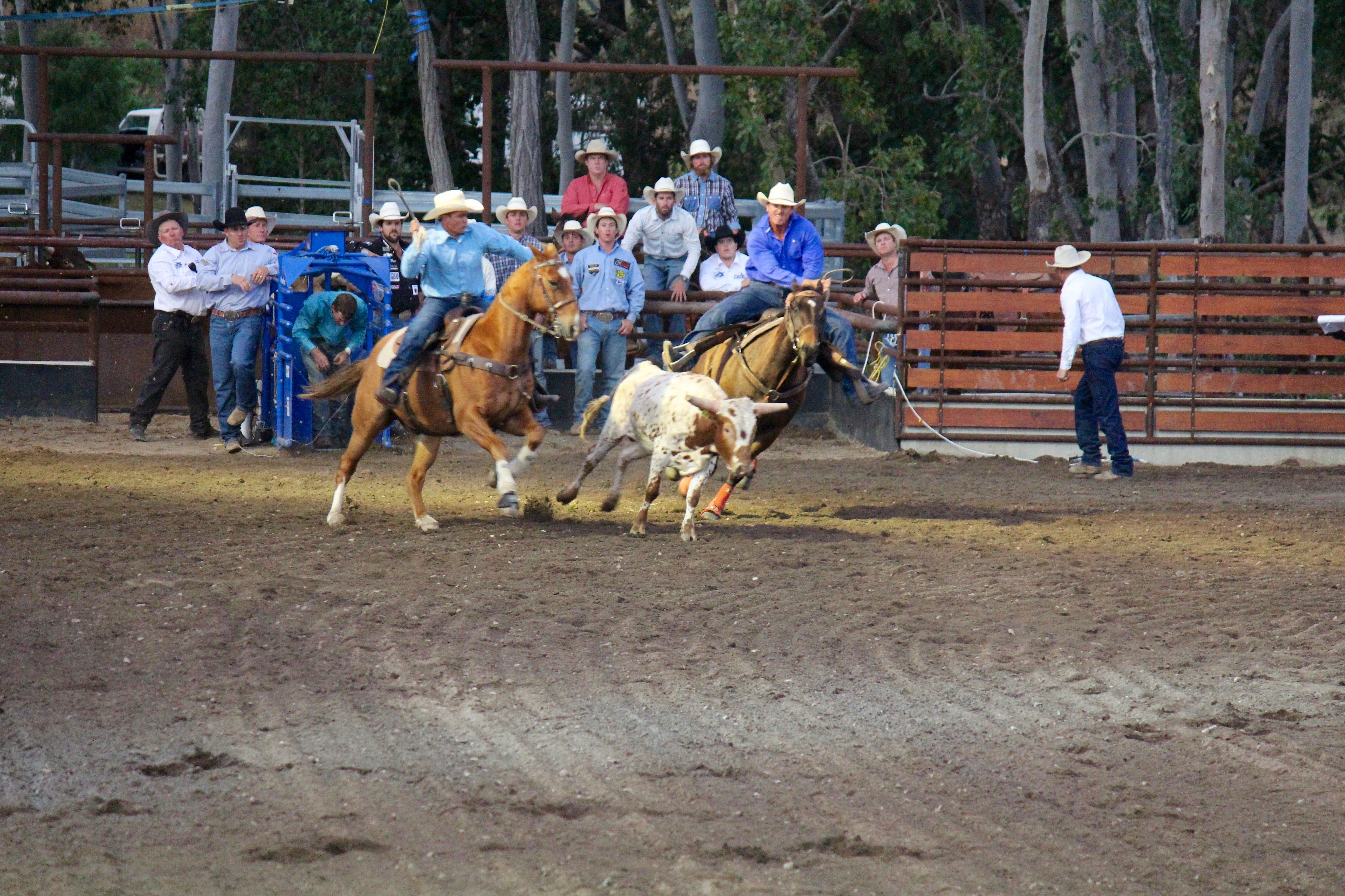 North Queensland Elite Rodeo - Mount Gambier Accommodation