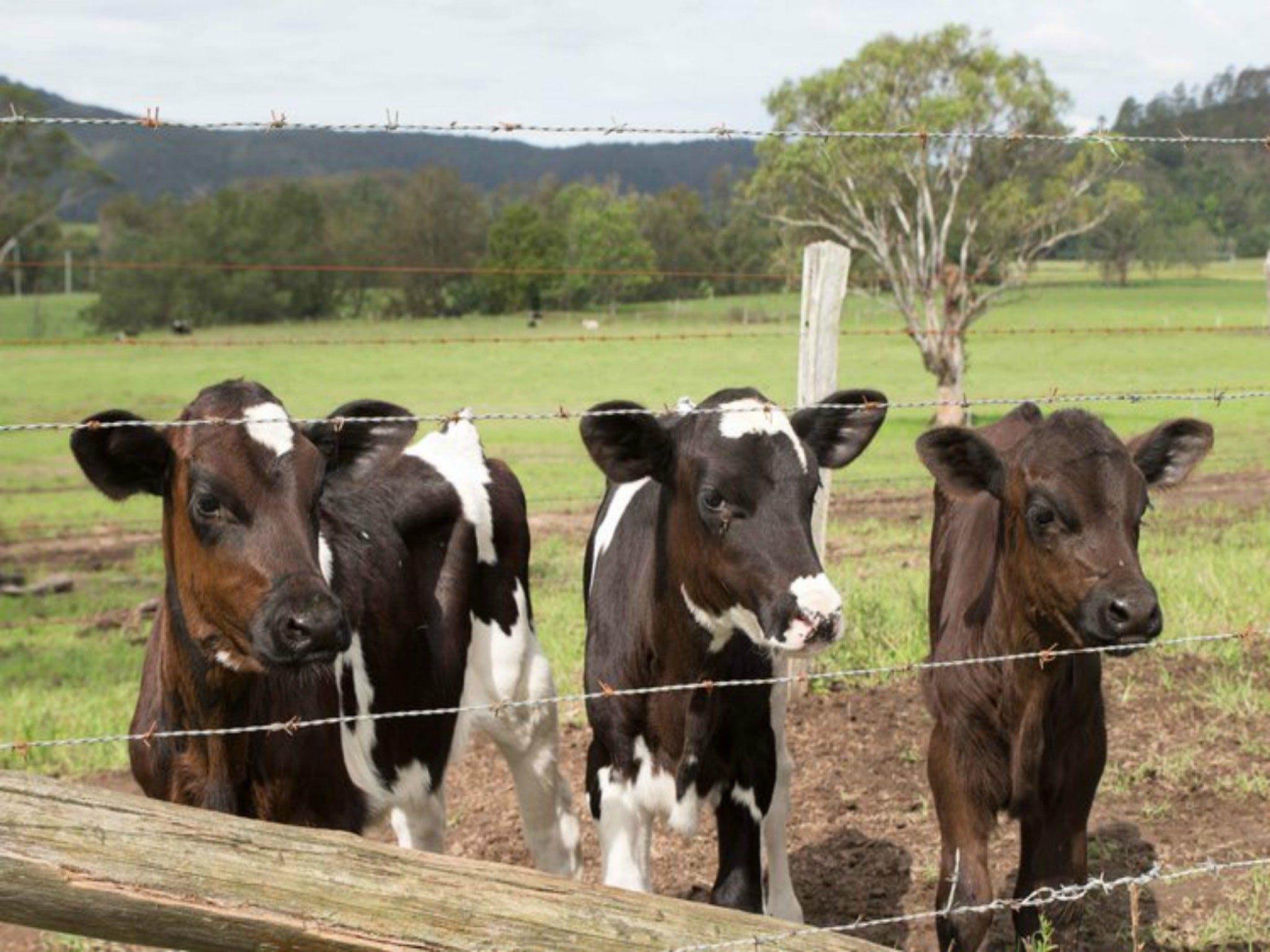 Bandon Grove Farm Tours - Mount Gambier Accommodation