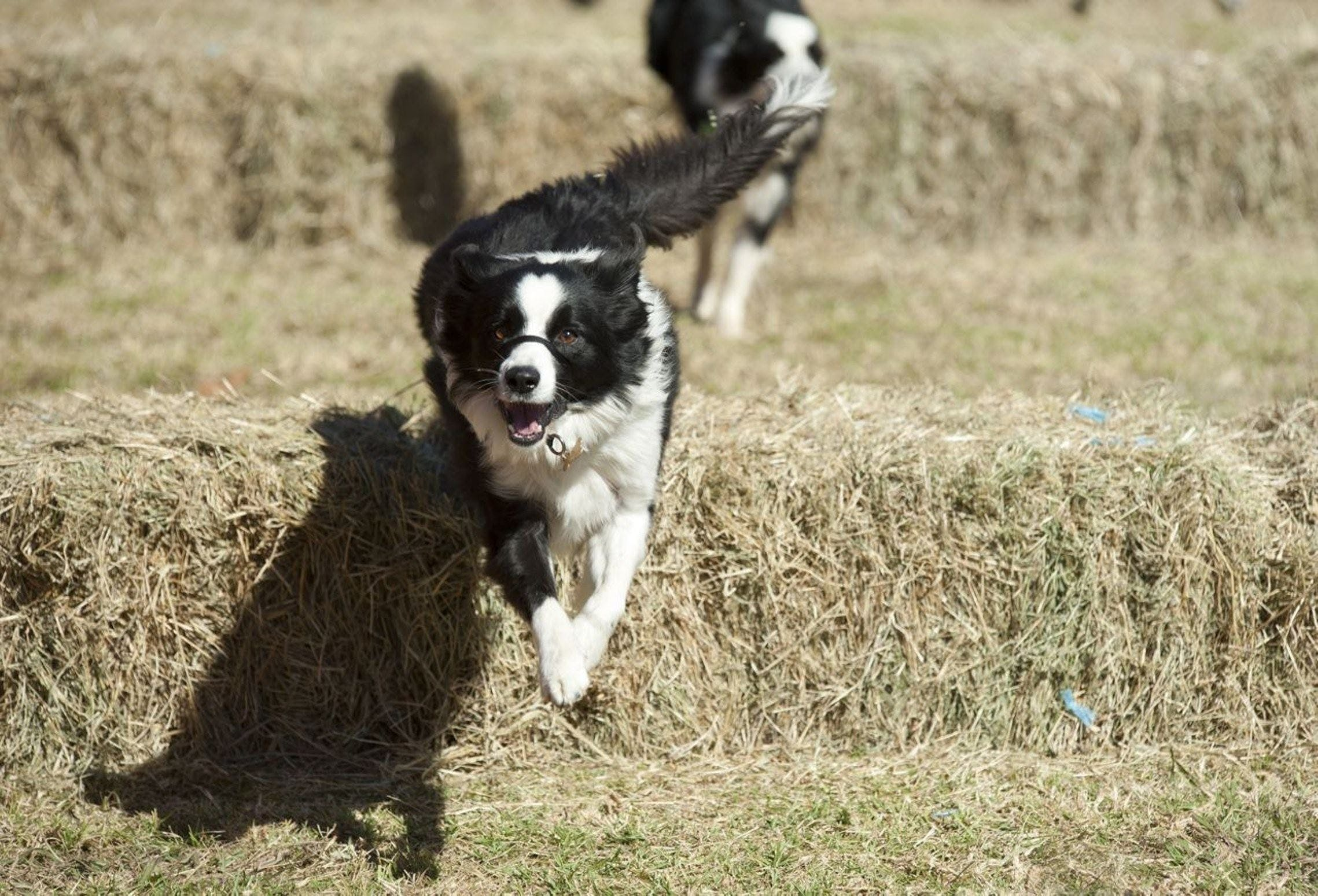 Great Nundle Dog Race - Mount Gambier Accommodation
