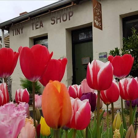 Tiny Tea Shop - Mount Gambier Accommodation